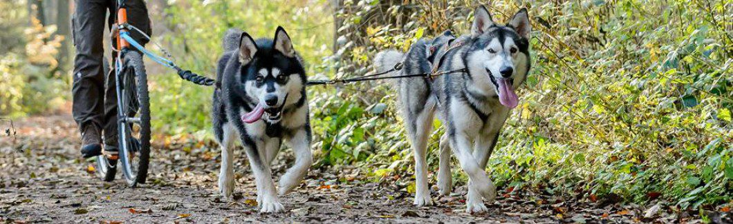 Zughundeschule Mushing-Dogs